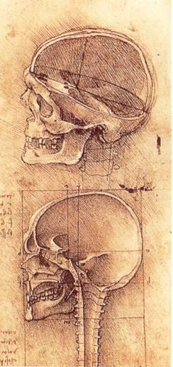 Il disegno rappresenta un disegno degli studi anatomici del cranio fatti da Leonardo da Vinci