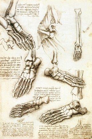 Studi anatomici di Leonardo da Vinci
