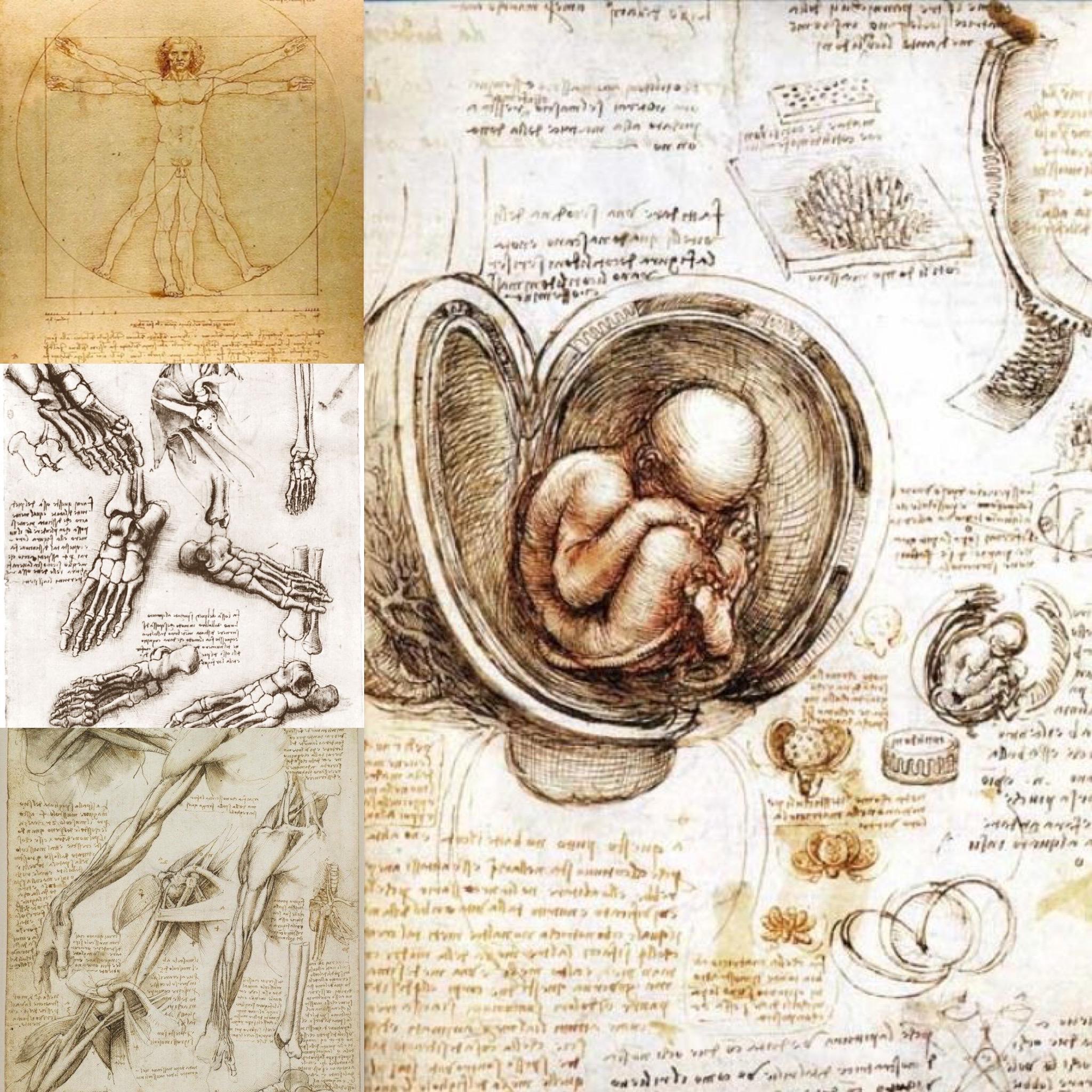 Studi anatomici e Uomo Vitruviano di Leonardo